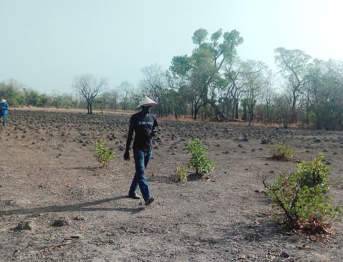 Ouverture prochaine d'un nouveau Centre de recherche à Kédougou : L'équipe du CRA de Tamba a procédé à la caractérisation du site